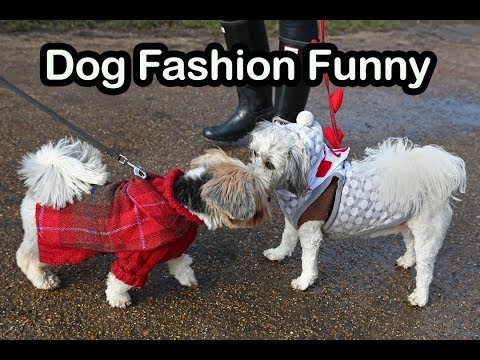 Dog Fashion Funny Video | Funny Dog Videos | Funny Pets