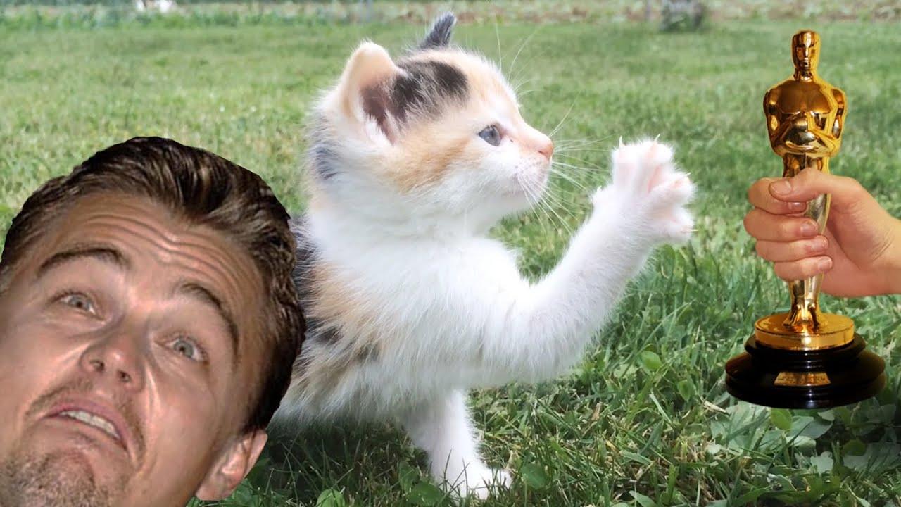 Leonardo DiCaprio finally wins an oscar - Cat edition