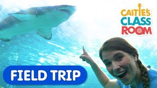 Learn All About Sharks & Sing Baby Shark at the Aquarium!