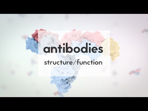 Therapeutic antibodies (Part 1): structure & function