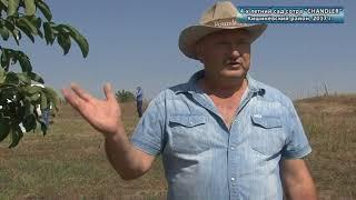видео Интенсивное ореховодство в Молдове: миф или реальность