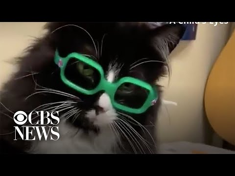 Cat-helps-kids-feel-comfortable-at-eye-doctor