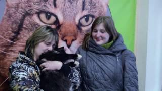 """Выставка собак и кошек """"Хочу домой"""". Январь 2017 года. Санкт-Петербург."""