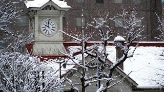 今年の雪まつりも終わってしまいました…(._.) 札幌恋しさにcoverしたら...