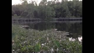 Ужасы на болоте