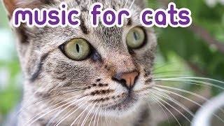 RELAXING Cat Music - 6 Hours of Fast Calming Music!