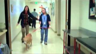 What's It Like When Your Pet Stays Overnight at the CSU Veterinary Teaching Hospital?