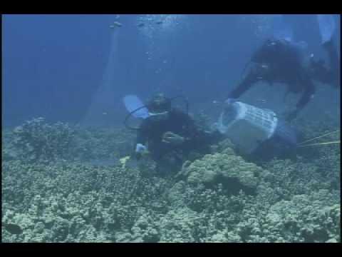 Aquarium Fish collectors in West Hawaii