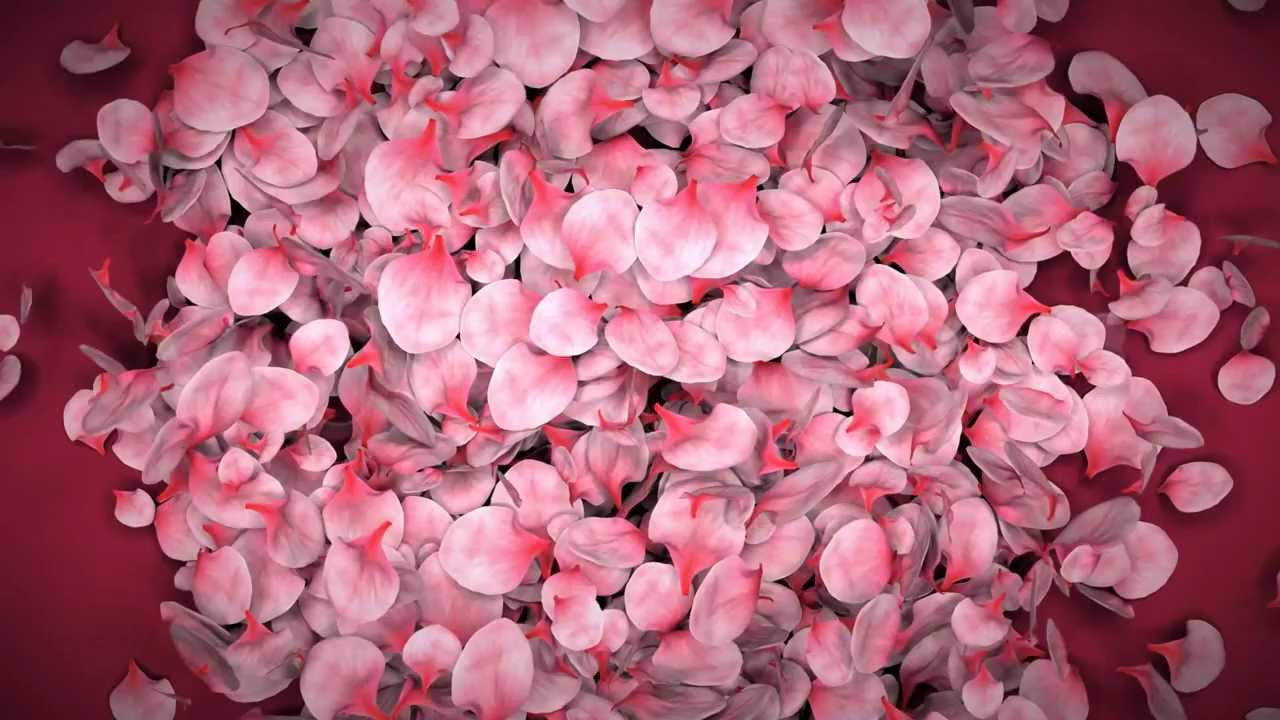 Falling Flower Petals Ae Template   YouTube