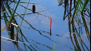 Рыбалка на крупных линей и карасей в тростнике Ловля линя карася в июне с лодки