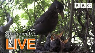 UK nature LIVE cams Day 1  - BBC Springwatch