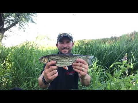 RIVER RODING STANFORD RIVERS BILLERICAY & DISTRICT ANGLING CLUB CHUB FISHING