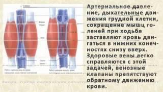 Варикоз Вен На Ногах Лечение Таблетки [Варикоз Вен На Ногах Лечение](, 2015-02-22T15:10:39.000Z)