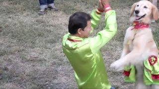 Tańczące zwierzęta