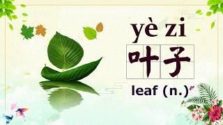 Chinese Vocabulary Food - 叶子 yè zi - leaf (HSK 4)