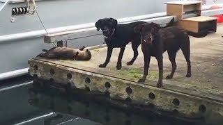 Dieser Otter wollte nur spielen, doch die Hunde wussten nicht wie…