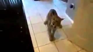 ДОМАШНИЙ ТИГР, кошки приколы картинки с надписями