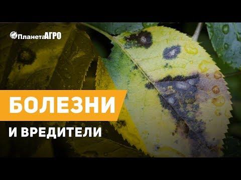 🐜 Болезни и вредители растений  ✔️  Защита сада и огорода с 🌿 Планета Агро