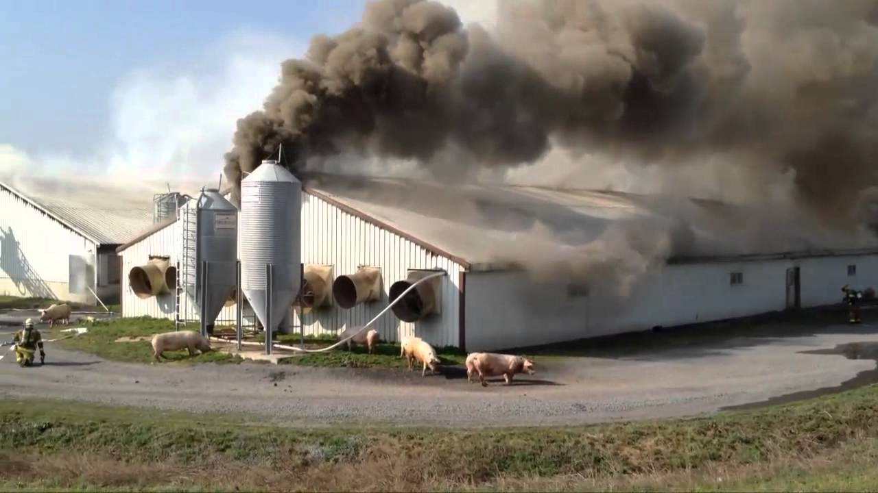 Hogs Die In 1 Million Barn Blaze Raw Video Youtube