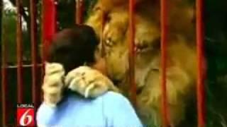 Lion kisses rescuer令人驚訝的獅子