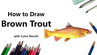 How to Draw a Brown Trout with Color Pencils [Time Lapse]