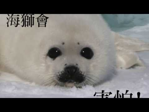 韋禮安-還是會 (Cover by NEO) #海獅會害怕 - YouTube