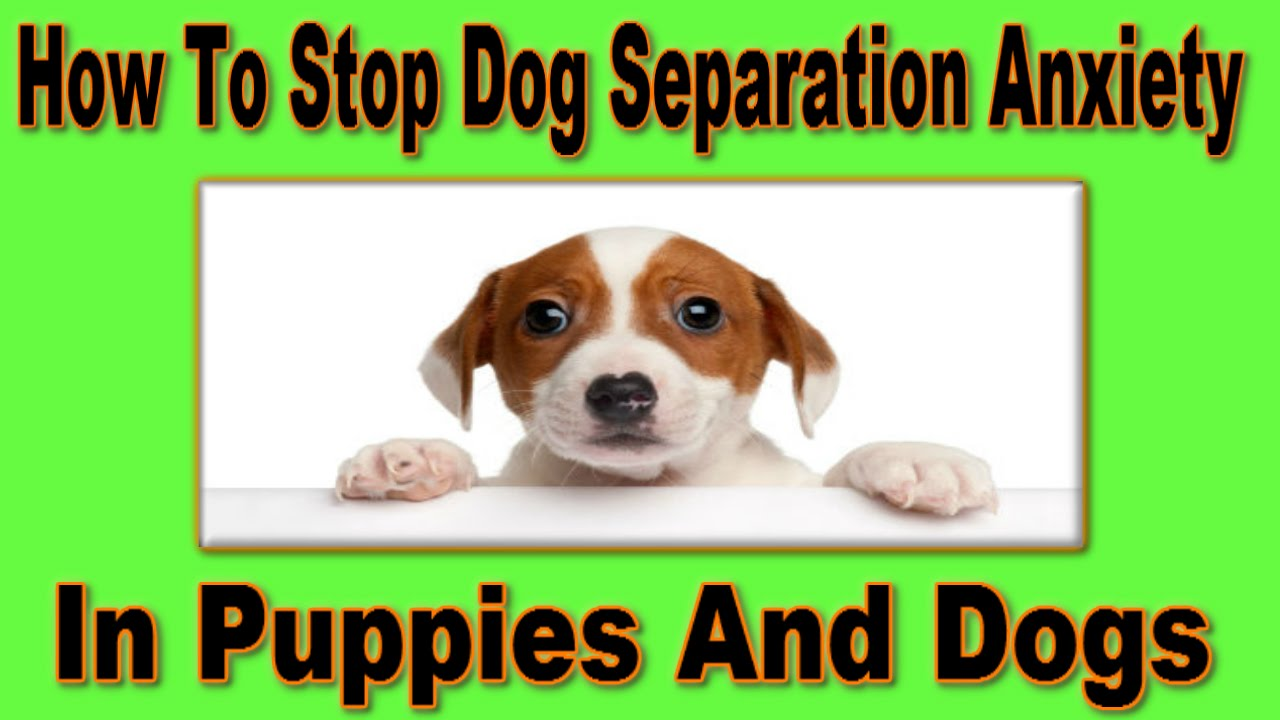 How To Stop Dog Separation Anxiety Guaranteed Stop Dog