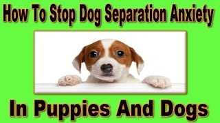 ▶▶ How To Stop Dog Separation Anxiety ◀ Guaranteed ▶ Stop Dog Separation Anxiety Quickly! :)))))))