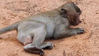 OMG!!! KING OF CRY BABY MONKEY falls out of tree when playing with his brother, Full Movie