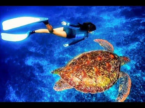 自由潛水FREE DIVING|用最近的距離看海龜|小琉球 LIU QIU - YouTube