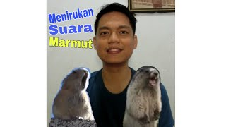 Menirukan Suara Marmut