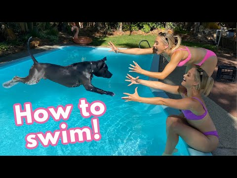 Teaching our PUPPY How to SWIM!