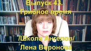 Выпуск 43.Грибное время/Школа Ангелов/Лена Воронова