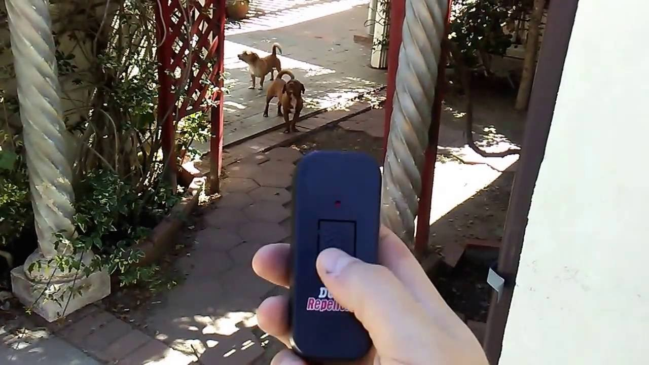 Behold, The Ultrasonic Dog