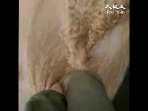 台风利奇马袭安徽 洪灾面前 村民全靠自救