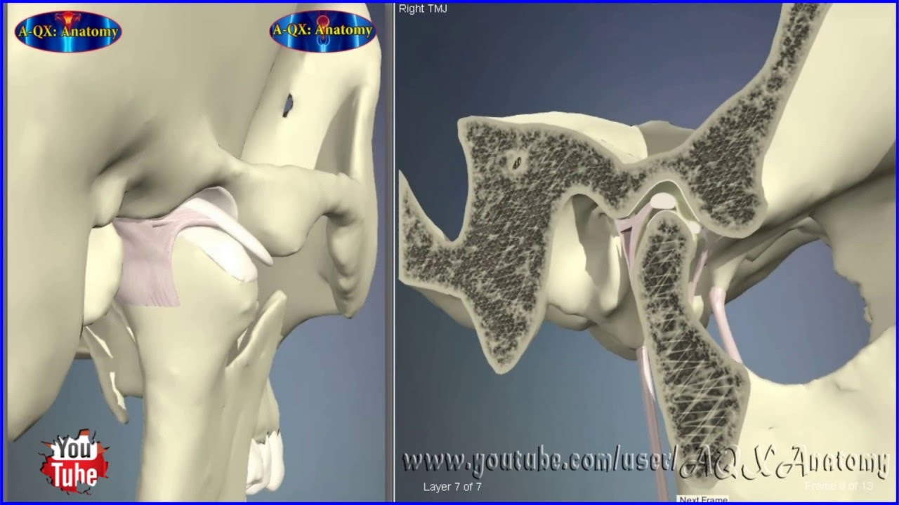 Temporomandibular Joint / TMJ | 3D Human Anatomy | Organs - YouTube