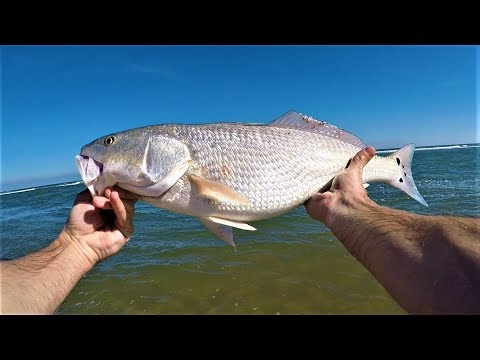 Outer Banks Fishing - Red Drum, Black Drum, Sea Mullet, Bluefish, Pompano