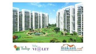 Tulip Violet, Sector 69, Gurgaon, Residential Apartments