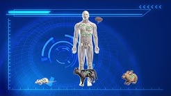 Plague bacteria found on fleas in Arizona