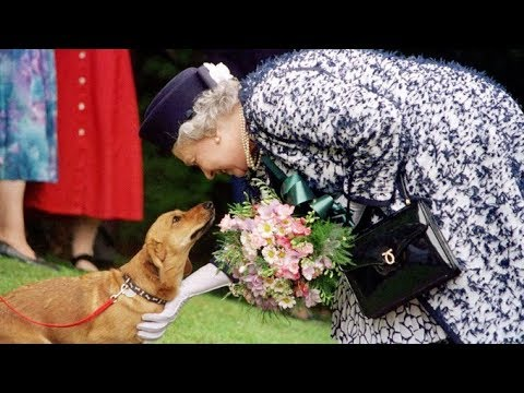 End Of An Era As The Queen's Last Royal Corgi Is Put Down | ITV News