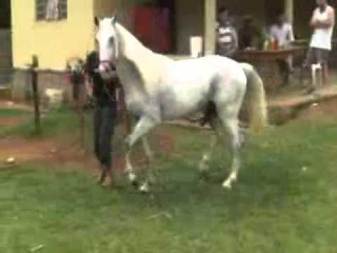 Horse/Donkey Mating Documentary - YouTube