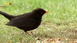 """Vögel im Garten zählen bei der """"Stunde der Vögel"""""""