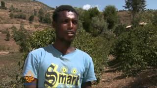 Khat tops coffee for Ethiopia farmers