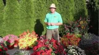 Plants and Flowers - 2012 Standout Performers: Part 1