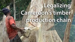 Legalising Cameroon's timber production chain