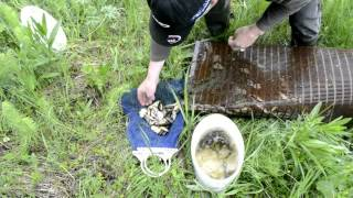 Ловля живца мордой. Как поймать живца ?(Ловля живца для рыбалки. Как поймать живца ? Ловля живца мордой.... Все секреты рыбалки - http://www.ulovanet.ru., 2014-06-15T17:06:46.000Z)