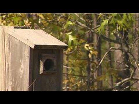 Bluebirds : What Is a Bluebird Trail?