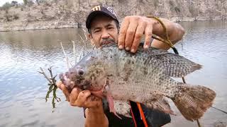 Domingo de pesca de Tilapias grandes