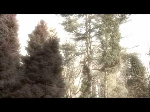 Roland Gaia SH-01-'Organic' (Original Composition)