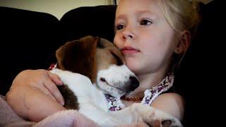 あったかいね、気持ちいいね。少女に抱っこされてうっとりとろとろ眠りにつく子犬